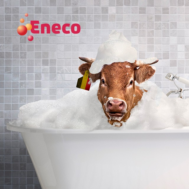 Eneco(w), star in your home!